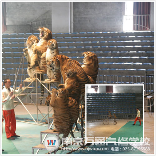 动物们很可爱,大家看了老虎和猴子的表演